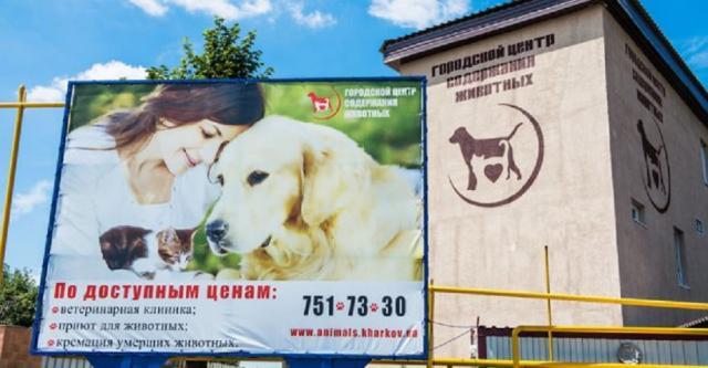 Харьковский приют нашел дом для 1700 животных и строит контакт-центр