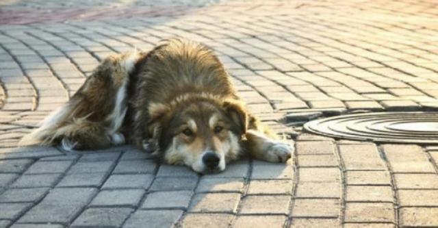 Коммунальные службы города реагируют на жалобы харьковчан по поводу ненадлежащих условий содержания домашних животных