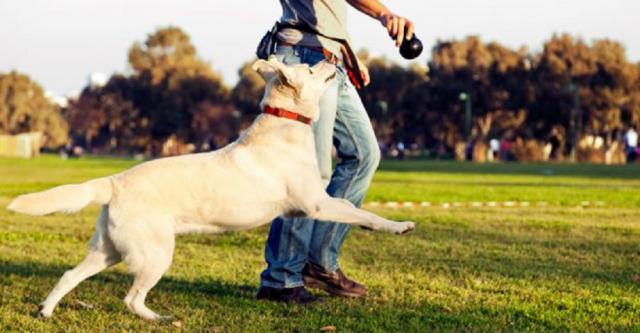 В Харькове установят еще пять площадок для выгула собак и автоматы с дог-пакетами