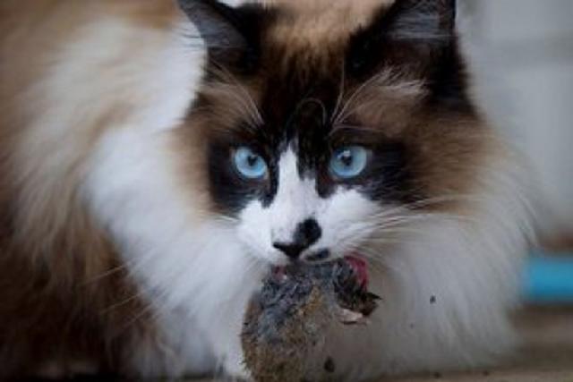 Киев направит 4,2 млн грн на помощь трем приютам для животных
