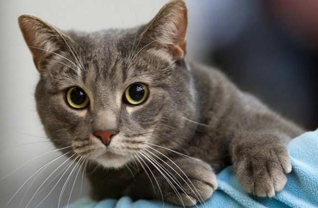 В апреле 2019 г. в г. Харькове стартовала программа ОСВ (отлов-стерилизация-возврат) бездомных кошек