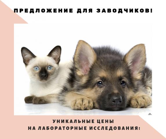 Предложение для заводчиков и питомников собак и кошек!