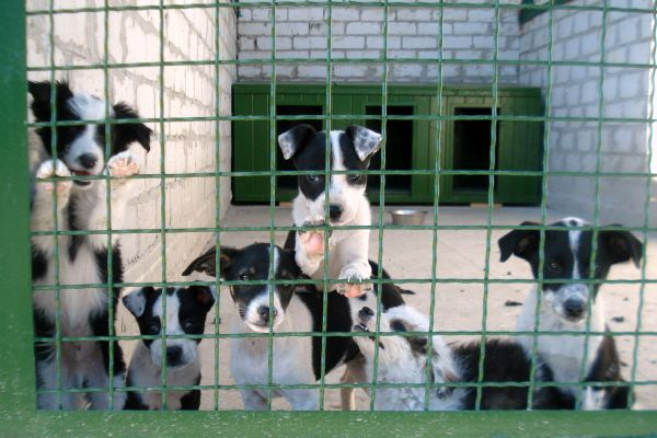 Shelter for stray animals (cats and dogs) in Kharkiv