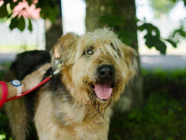 Во Львове объявлено о начале кампании по выявлению не зарегистрированных в местном муниципалитете домашних животных