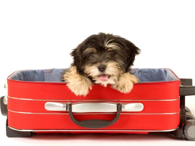 Забронируйте гостиницу для своего питомца и путешествуйте со спокойной душой