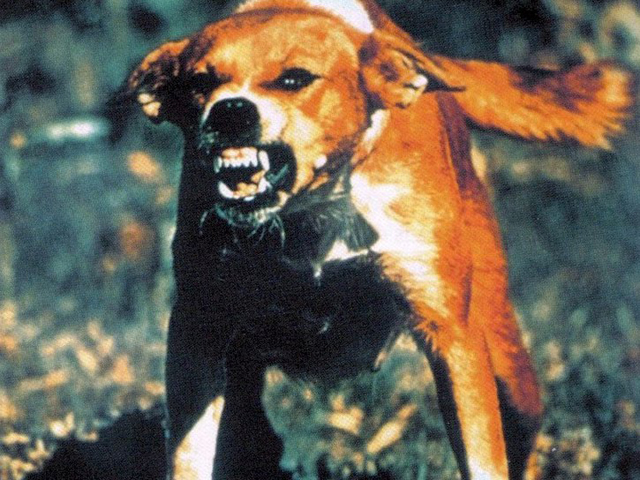 На Харьковщине ввели карантин из-за бешенства собаки