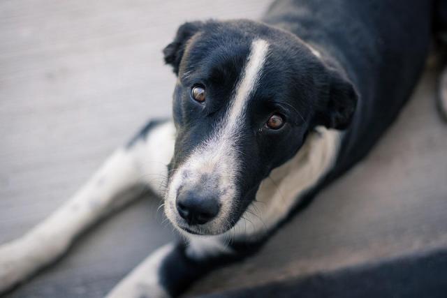 Сроки проведения ветеринарных процедур для бездомных собак