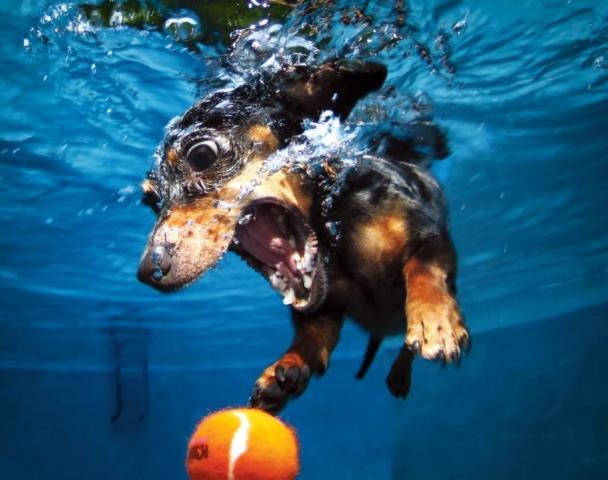 Правила купания собак в водоемах