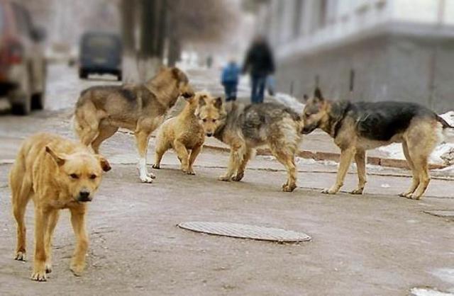 Харьковчане просят мэрию решить проблему с бродячими собаками