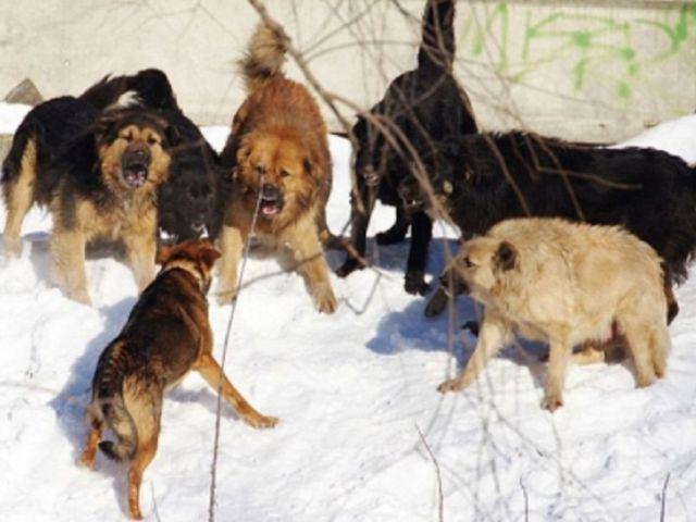 В подконтрольном сепаратистам Харцызске, Донецкой области, стая собак загрызла до смерти 12-летнюю Лизу Канарейкину.