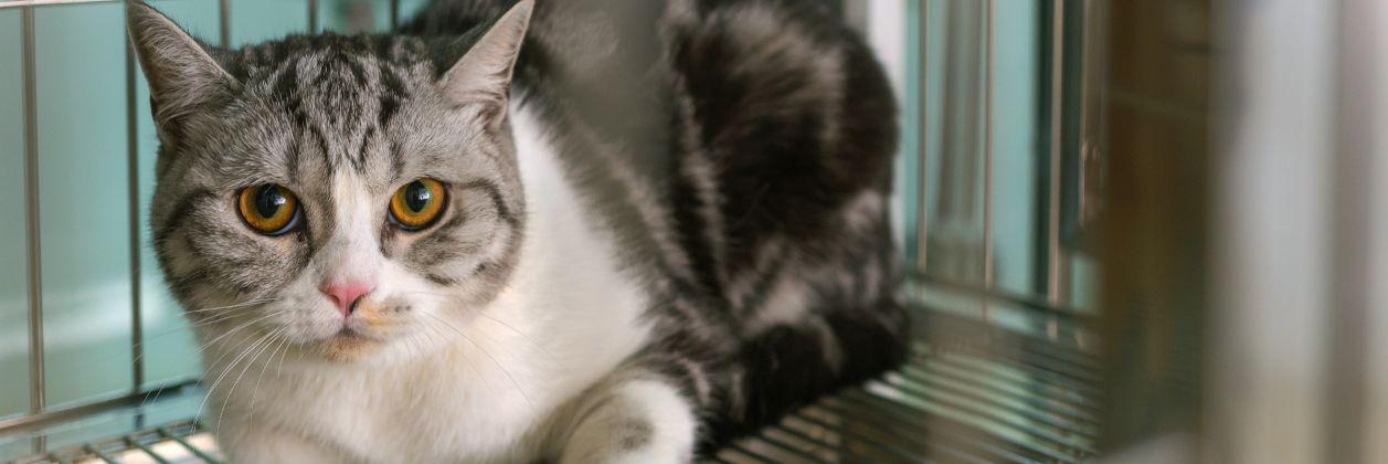 Стационар в ветклинике Центр обращения с животными