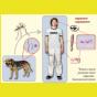 В Николаеве 30% бездомных собак болеют «сердечным глистом»: заразились трое горожан