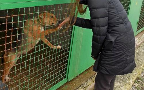 Провели День рождения в Центре обращения с животными.