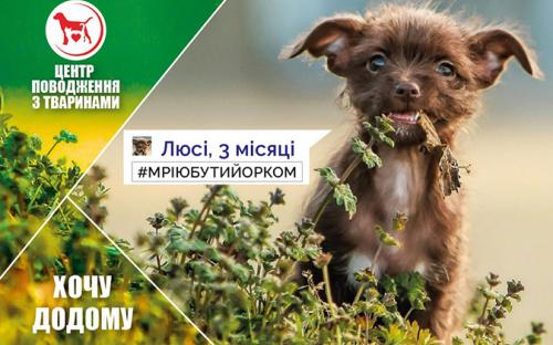 """КП """"Центр обращения с животными"""" - реклама животных приюта к новогодним праздникам"""