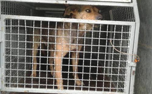 Собака, обитающая на территории гаражного кооператива, покусала ребенка