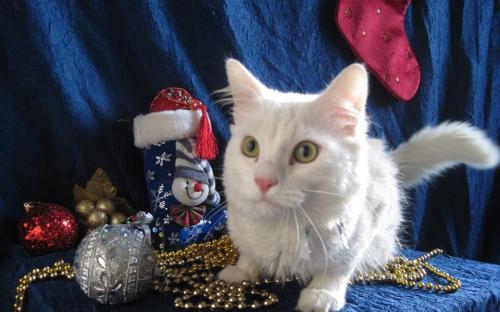 """Акция КП """"Центр обращения с животными"""" """"В Новый год - новый кот!"""""""