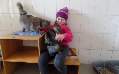Знакомство с собаками, общение с кошками. Интересная и познавательная экскурсия