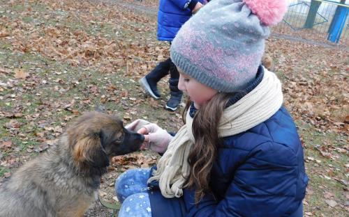 26 ноября в городском приюте для животных прошел традиционный воскресный День открытых дверей