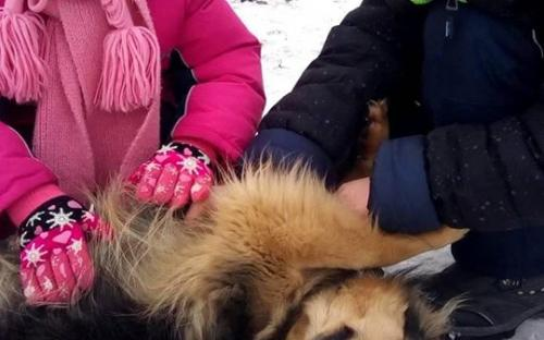 Маленькие волонтеры празднуют День рождение в Центре со своими любимыми животными.