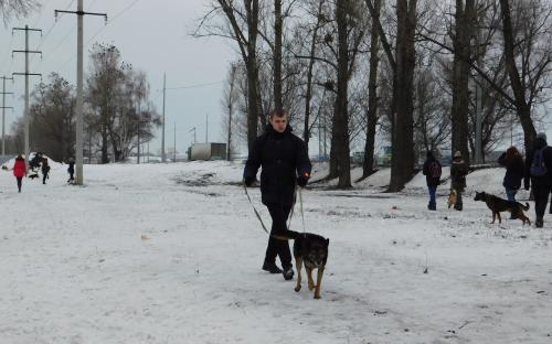 """КП """"Центр обращения с животными"""" и Dog Fashion Show 2018 анонсирует массовый забег людей с собаками"""