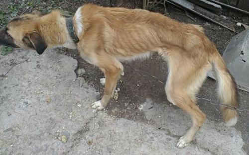 В поселке Зеленый Яр Запорожской области собаки, которых семья заводила для охраны дома, умирали от истощения.