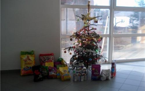 Возле елочки подарки для животных