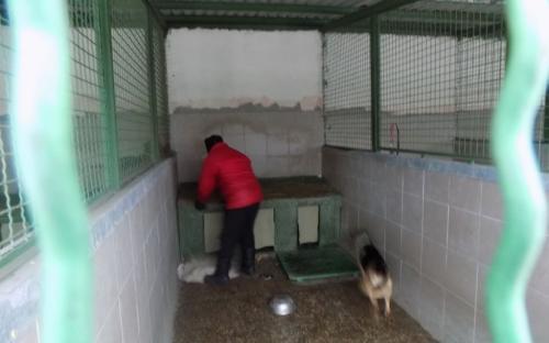 Репортаж. Утро в Приюте Центра обращения с животными