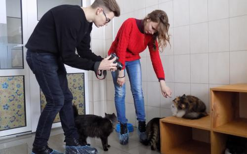 Приютские кошки позировали для конкурса красоты