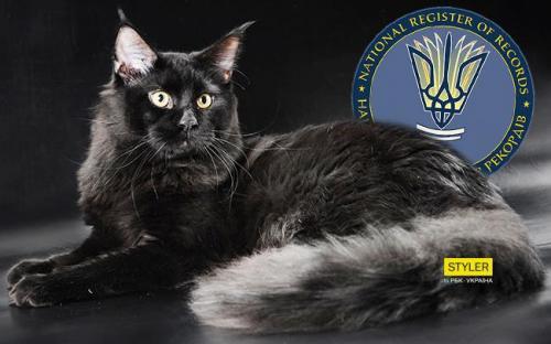 в книгу рекордов Украины внесли самого длинного кота