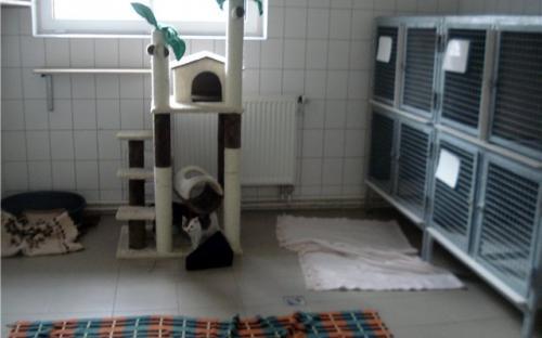 зона чистого приюта, где люди могут выбрать животное