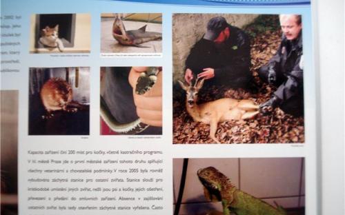 На стендах показаны фотографии животных которые попадали в приют