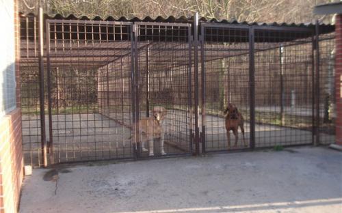 Вольеры для выгула собак