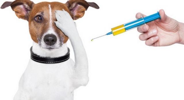 График осенней плановой вакцинации против бешенства домашних животных на 2019 год