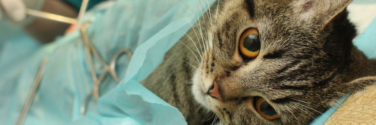 Хирургия в ветклинике Центр обращения с животными