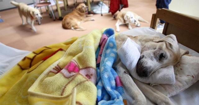 В Японии работает уникальный Дом для престарелых собак