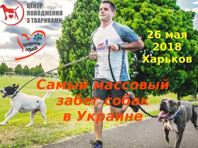 Самый массовый забег людей с собаками в Украине