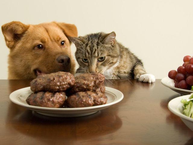 Еда, убивающая домашних животных