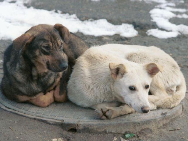 «Говорит Николаев: Бродячие животные»