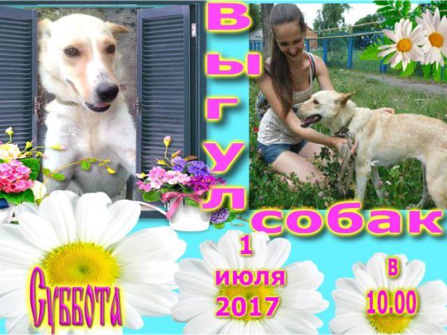 Выгул собак в КП Центр обращения с животными, Харьковском приюте для животных