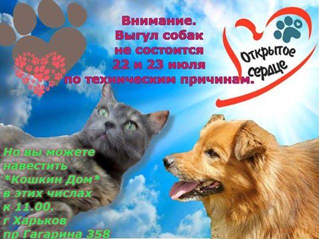 Выгул собак в КП Центр обращения с животными Харьков