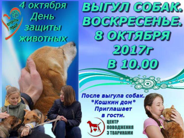 """Выгул собак и посещение """"Кошкин Дом"""" в КП Центр обращения с животными"""