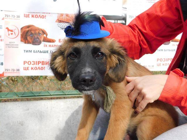 Гламурные питомцы Харьковского Центра содержания бездомных животных
