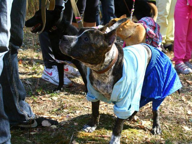 Всемирный день защиты животных. Проходил в поселке Жуковского