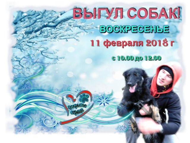 """Выгуливаем собак и посещаем """"Кошкин дом"""" 11 февраля 2018 года"""