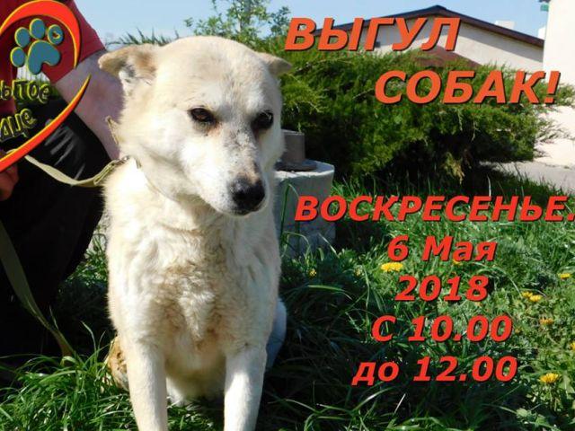 воскресный выгул собак в харьковском приюте Центра содержания животных