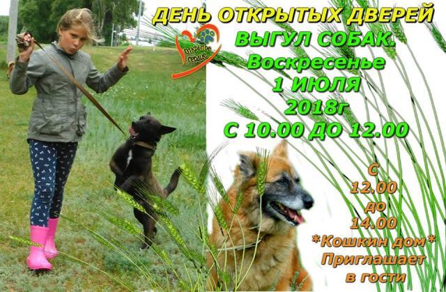 День открытых дверей в харьковском Центре содержания бездомных животных