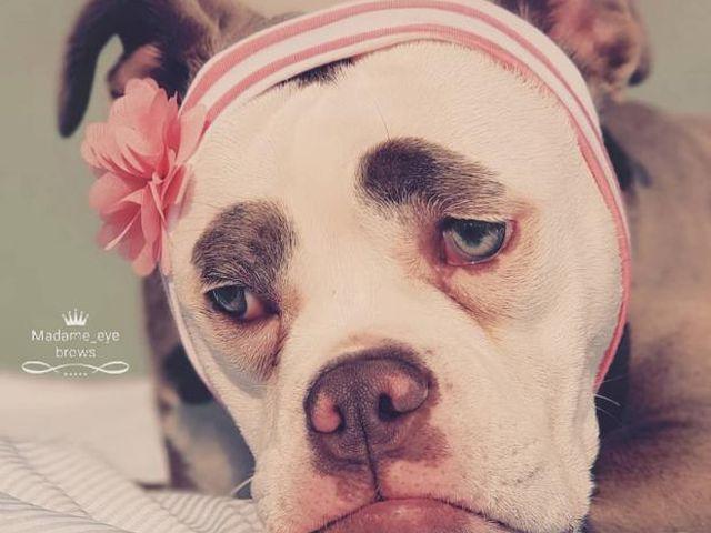 собака с грустной мордочкой