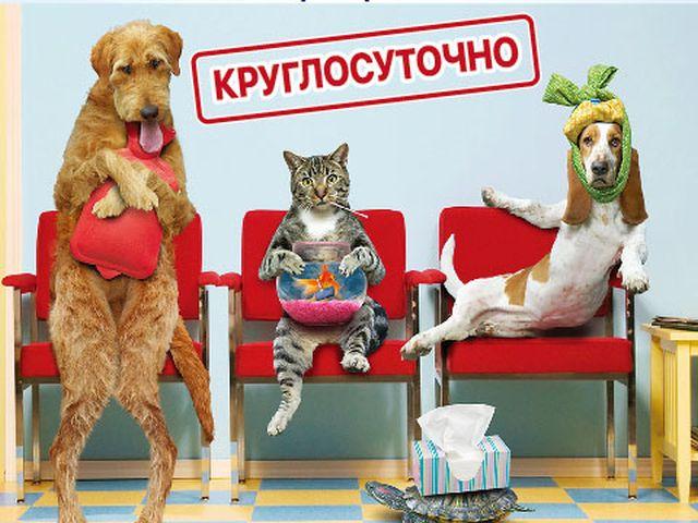 C 1 марта ветеринарная клиника Центра обращения с животными работает круглосуточно!