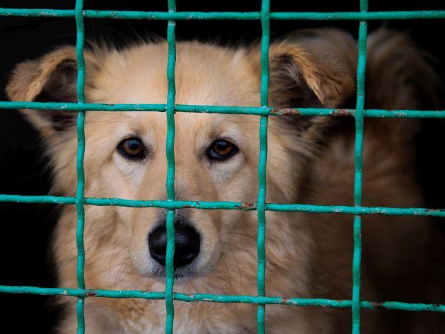 В Харькове появится первый муниципальный приют для животных