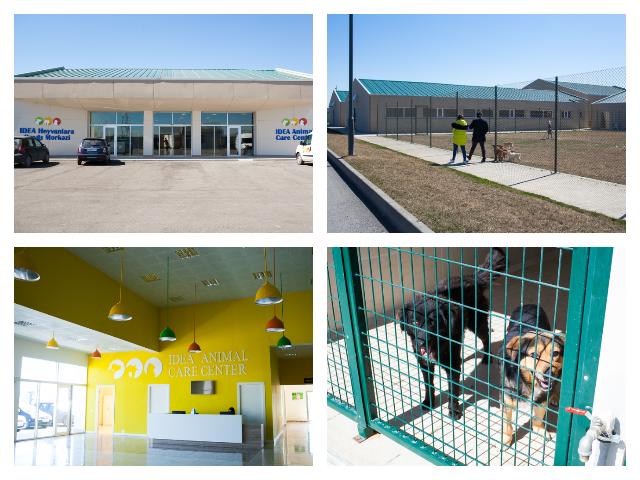 Центр по уходу за животными IDEA в Азербайджане